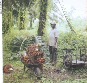 Palmes Cameroun