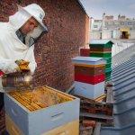 phoca_thumb_m_apiculture-urbaine_jpg