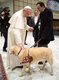 2015 Pape chien d'aveugle